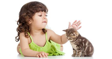 Doktor Veterinar Nasihat Ibu Bapa Patut Biarkan Anak Anak Bela Kucing Supaya Jadi Terapi Buat Anak Pa Ma